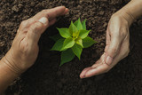 Hand protecting a green young plant with growing in the soil on nature background. - 208781715