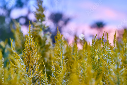 Fotobehang Natuur flower, close up macro, selective focus