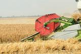 Closeup Combine harvesting a wheat field. Combine working the field. - 208782377