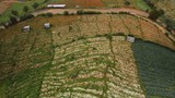 Aerial view vegetable plots lettuce on the northern Thailand. - 208788700