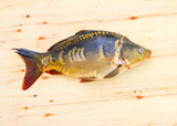 Traditional food for christmas table in Czech Republic and Poland. The Common Carp - Cyprinus Carpio. Fishing catch. - 208790119