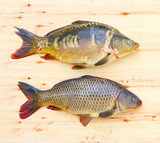 Traditional food for christmas table in Czech Republic and Poland. The Common Carp - Cyprinus Carpio. Fishing catch. - 208790152