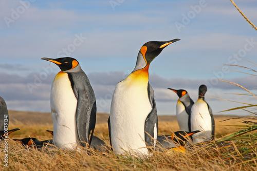 Aluminium Pinguin King Penguin