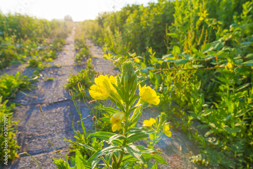 Fotobehang Zonsopgang Flowers in the light of sunrise in spring