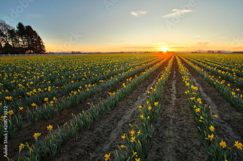 Fotobehang Zwart Flower Sunset