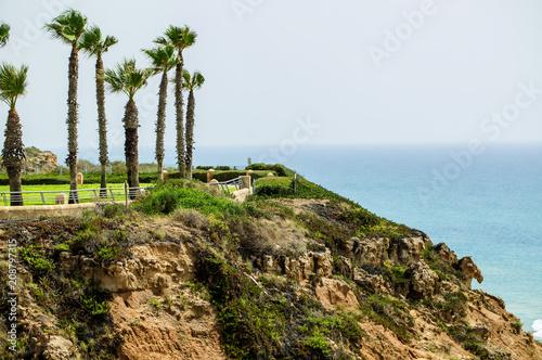 Foto Murales palm trees on the Mediterranean coast in Israel city of Netanya