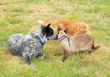 Two cats and a dog having a discussion outdoors - 208800322