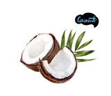 coconut watercolor illustration - 208803312
