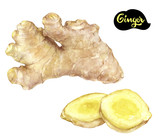 ginger watercolor illustration - 208803398