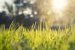 Artistic blurry grass with sunlight and lens flare background. Selective focus used.