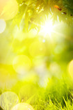 Abstract spring or summer  Background; green grass and tree leaves - 208818734