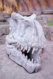 Paleontology. Big stone skull of dinosaur outdoors.