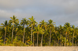 Scenic view to coconut palm trees and beach in golden light of sunset - 208827719