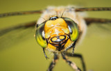 Smiling Dragonfly :) - 208852194