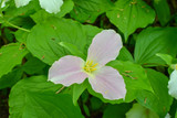 Pink wildflower in the woods - 208857340
