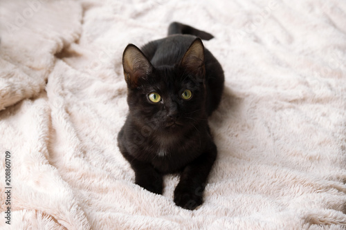 Portrait of funny little black kitty on a pink blanket, top view.