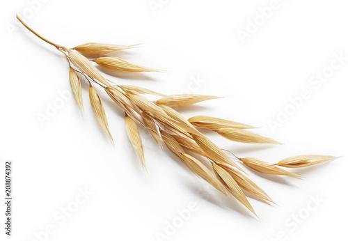 oat plant