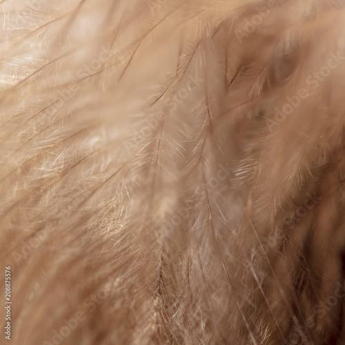 Plexiglas Eagle Feathers at the eagle as a background