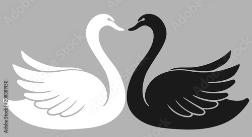 two swan lovers one against another shaping a heart