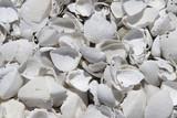 Bleached Seashells - 208892393