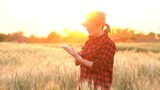 A woman farmer examines the field of cereals and sends data to the cloud from the tablet. Smart farming and digital agriculture. - 208892571