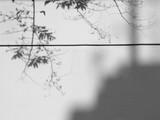 tree shadow on white wall - 208898163