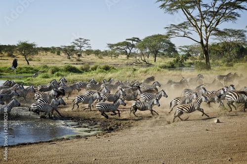 Foto Murales Serengeti, Tansania