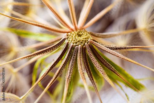 Canvas Paardenbloemen Macro dandelion seeds