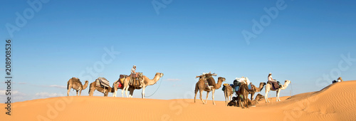 Fotobehang Kameel Caravan of camels in the Sand dunes desert of Sahara, South Tunisia