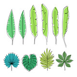Tropical leaves vector illustration.