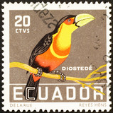 Nice toucan on old stamp of Ecuador - 208937331