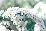 Beautiful blossom springtime garden landscape. Blossoming white petals branch. Shallow depth of field, copy space. - 208939339