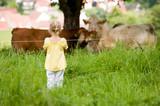 Mädchen beobachtet Kühe auf der Weide