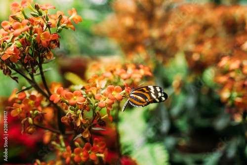 Fotobehang Vlinder Beauty in nature. Butterfly on orange flowers.