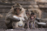 Two monkeys are looking with suspicion - 208950320