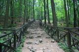 Fototapeta  - Kamienne schody w lesie, szlak turystyczny na Łysicę, Góry Świętokrzyskie © Monika