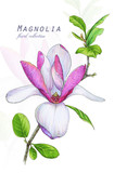 Botanical illustration. Postcard card with blossoming pink magnolia flower. Imitation of watercolor. Drawing with alcohol markers. - 208960777