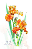 Botanical illustration. Postcard card with blossoming orange irises flowers. Imitation of watercolor. Drawing with alcohol markers. - 208960911