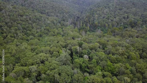 Aerial Shot of Jungle