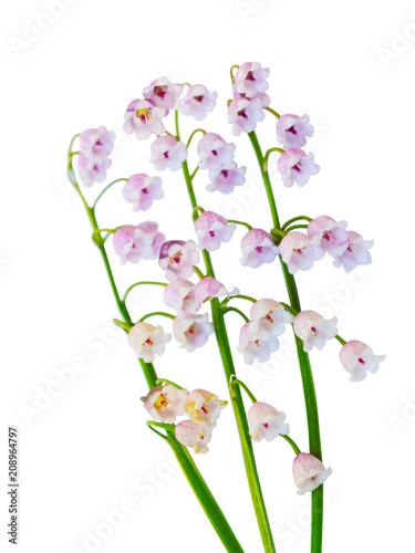 Fotobehang Lelietjes van dalen May Bells Lily Flowers