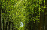 Walkway, lane, path with green trees in the forest - 208968370
