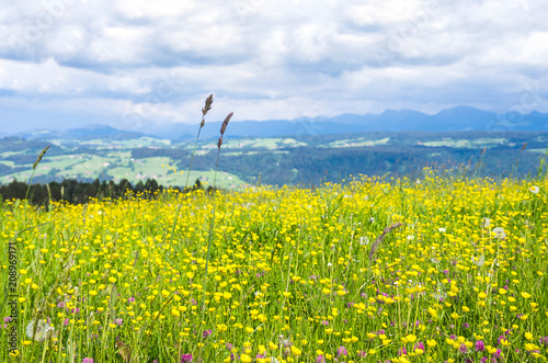 Fotobehang Landschappen Allgau Landscape near Lindau, Bavaria, Germany