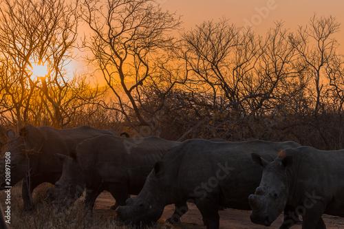 Poster Rinocerontes