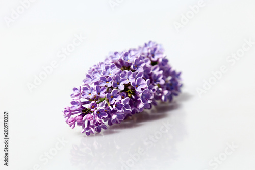 Purple Lilac Flowers Isolated on White Background.