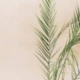 Tropical palm leaves on pale pastel beige background. Minimal lifestyle concept.