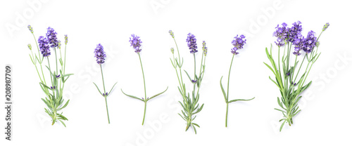 Floral banner flat lay Lavender flowers - 208987709