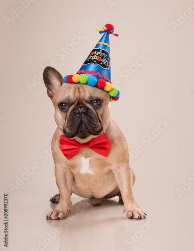 Fotobehang Franse bulldog Happy Birthday, Frenchie