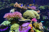Colorful corals under water in an aquarium - 208995928