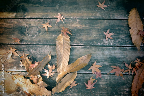 Fotobehang Tokio 湖畔の公園の秋の風景16