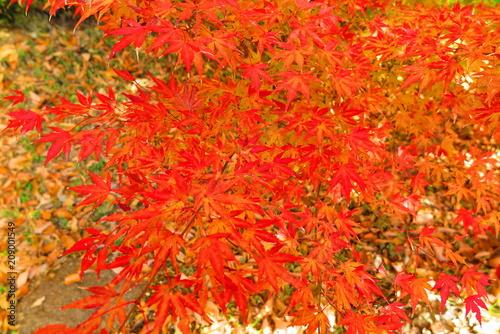 Aluminium Rood 湖畔の公園の秋の風景39